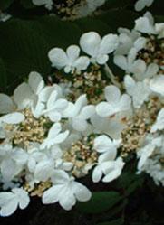 des-leaf-1