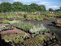 Longframlington Gardens Nursery